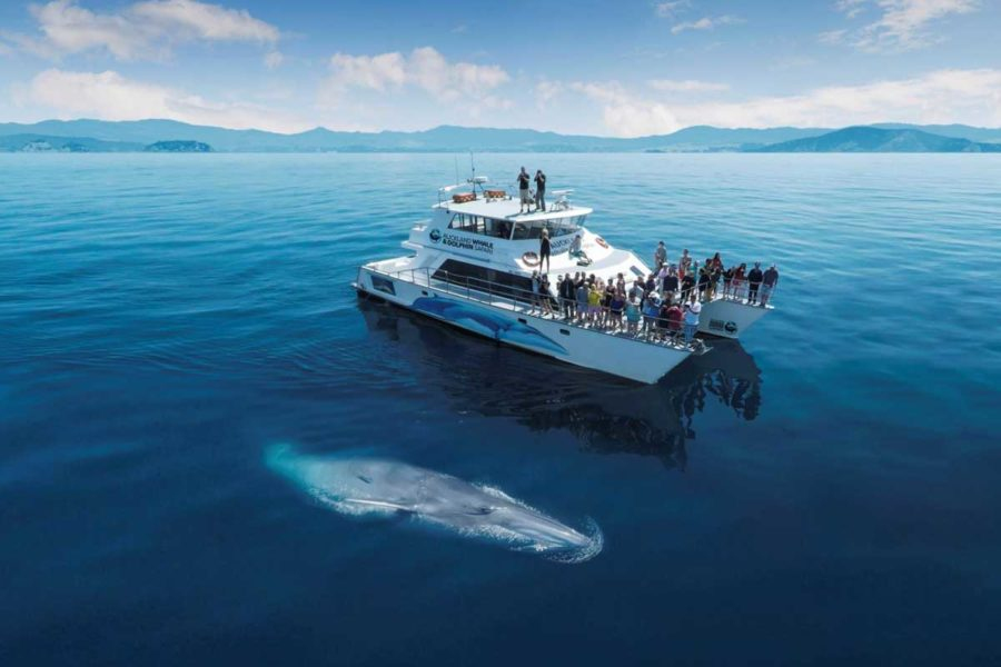 14 Day New Zealand Family Guided Tour
